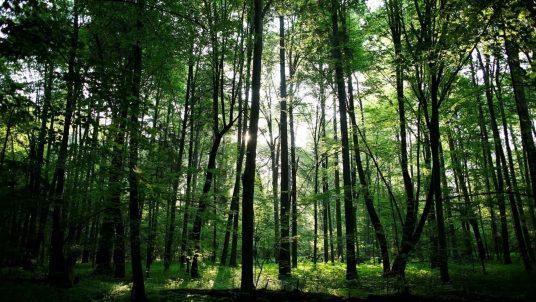 Начало пересмотра белорусских стандартов в области лесной сертификации