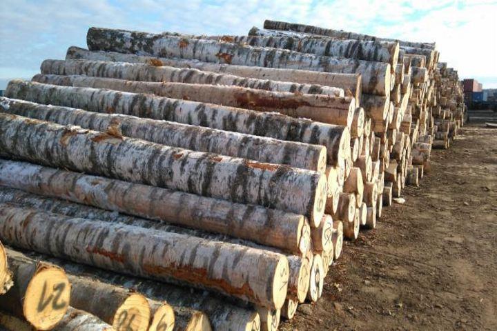 Изменение № 1 к СТБ 2315-2-2013 (EN 1316-2:2012, NEQ) «Лесоматериалы круглые лиственных пород. Сортировка по качеству. Часть 2. Береза, осина, ольха»